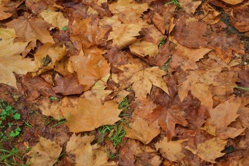 Hier, c'était l'automne.