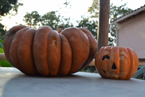 Halloween approche...