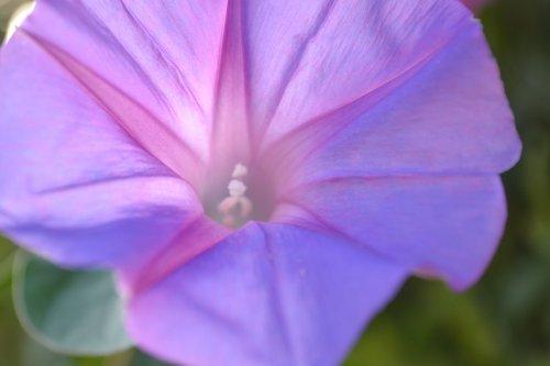 Flowers Powers