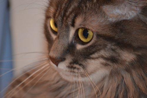 Minou(a) de chat....