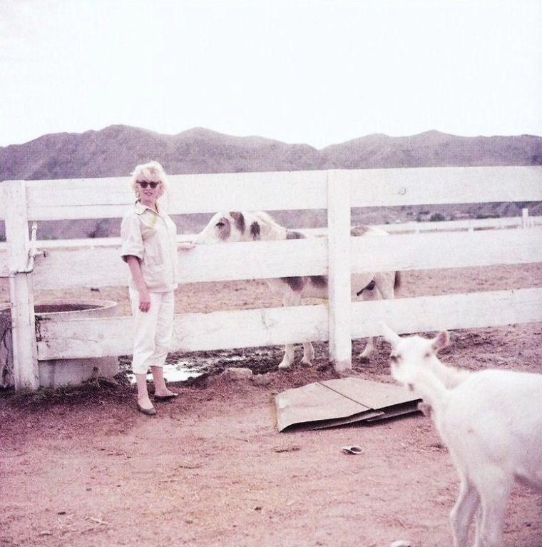 """1954, Marilyn retrouve Milton H GREENE pour de nouvelles sessions photographiques, notamment avec celle-ci intitulée """"Arizona""""."""