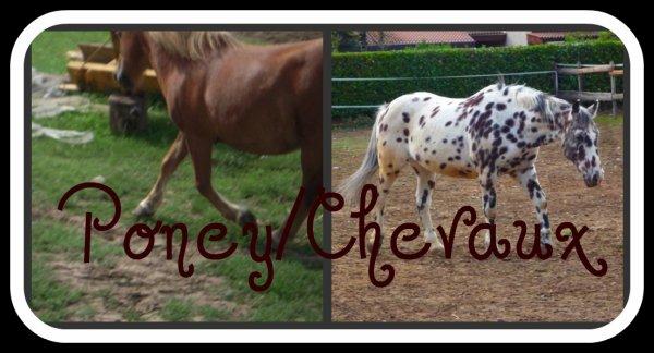 Chevaux/Poney