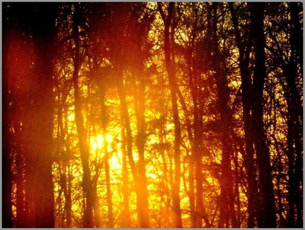 au boulot dans la forêt de Chaux  (Jura), le reste de mes photos intimes est en blog secret