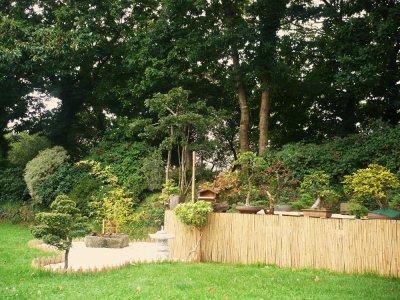Jardin japonais bonsa bonsa du bout du monde Jardin japonais bonsai