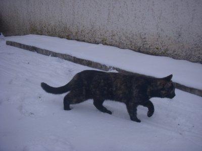 pistache sous la neige