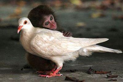 Encore une douce image... si seulement ce n'était pas une chose rare....ce serrait si beaux... de voir de l'amour partout....