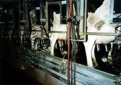 l'alternative aux produits laitiers