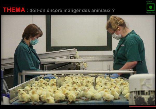 THÉMA : DOIT-ON ENCORE MANGER DES ANIMAUX ?