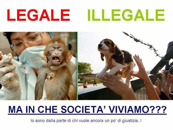 La vidéo du sauvetage de beagles en Italie - 28/04/2012