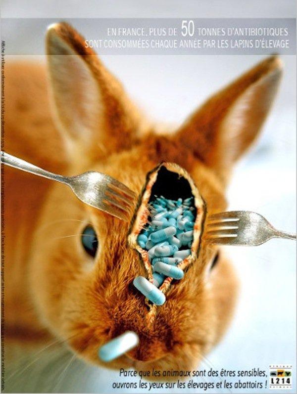 50 tonnes d'antibiotiques consommés par les lapins en France par AN...