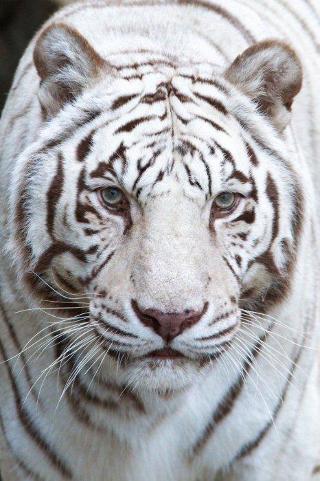 Blog de aline-bi-zoo