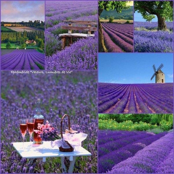 Un des emblèmes de la Provence