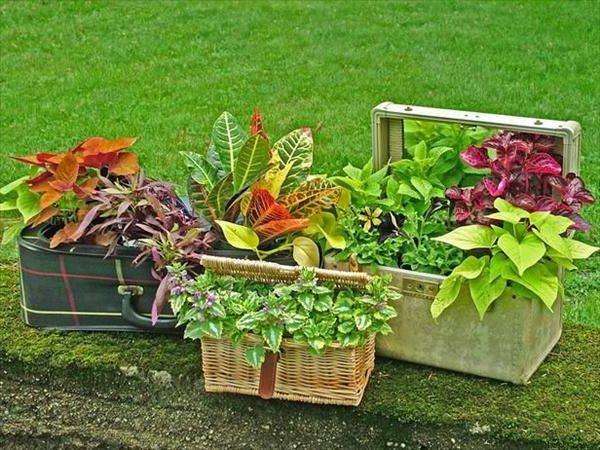 Des idées originales pour présenter tes plantes.