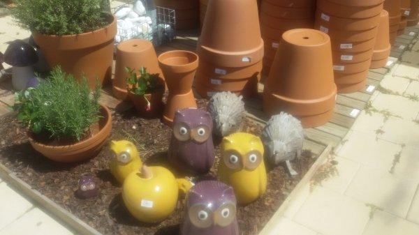 Mercredi dernier, visite à la jardinerie