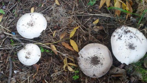 Tressy a trouvé des champignons dans le jardin.