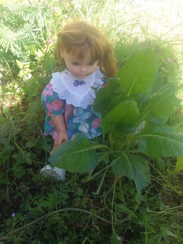 Il y a des blettes sauvages au jardin.