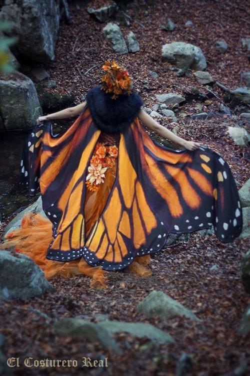 Bonne journée les amis, avec ce superbe costume papillon.