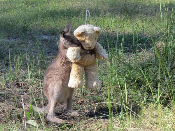 Même les kangourous aiment les nours!