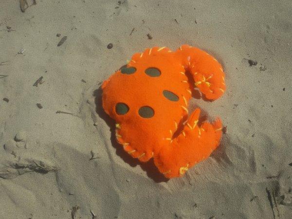 Invasion de crabe géant  en provenance de la Seine Maritime.