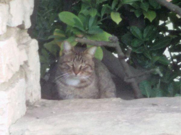 Les chats errants de mon quartier que plusieurs personnes nourrissent.