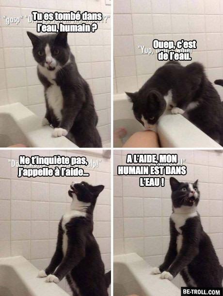 Mots de chat.