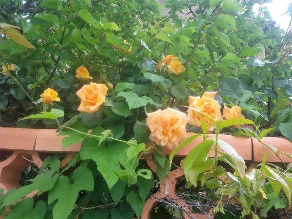 Des fleurs au hasard des promenades.