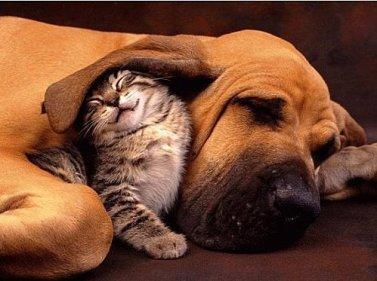 Chien et chat pour vous souhaiter une bonne journée.