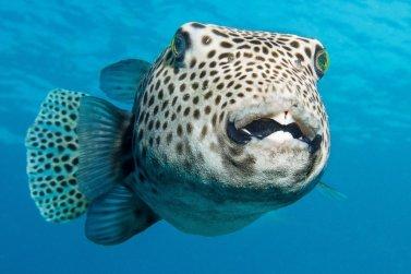 Le vendredi, c'est poisson : poisson au crochet et poisson-globe.