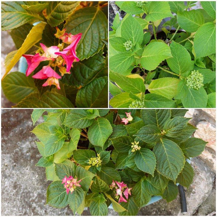Dans le jardin  de ma mère.
