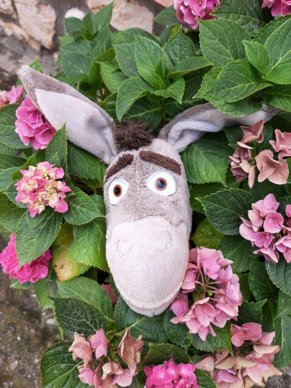 Bon vendredi les amis, l'âne appartient à Gordon, le shit tzu de ma nièce Vanessa. Photo prise hier chez ma mère.