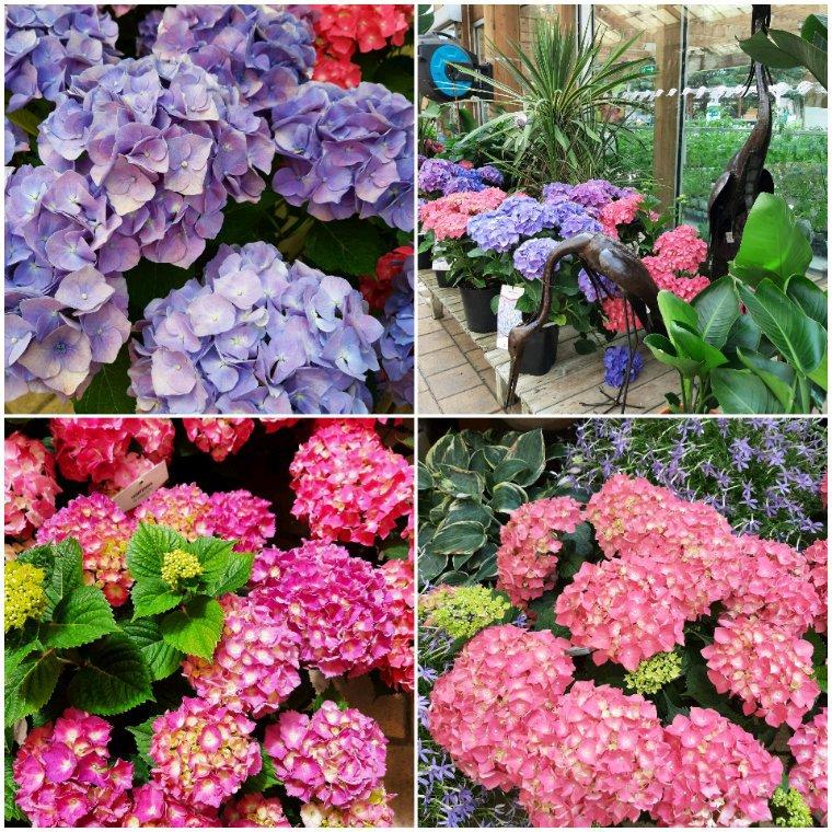 Pour aika08 et tous ceux qui aiment les fleurs.