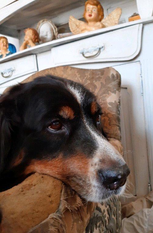 Sofia, 9 ans le 20 juin dernier, bien installée sur le fauteuil de Lily,..