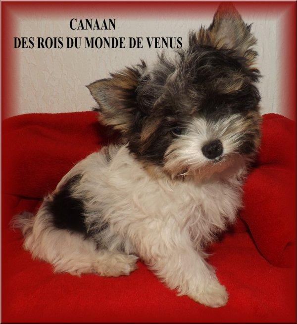 """CANAAN DES """"ROIS DU MONDE DE VENUS"""""""