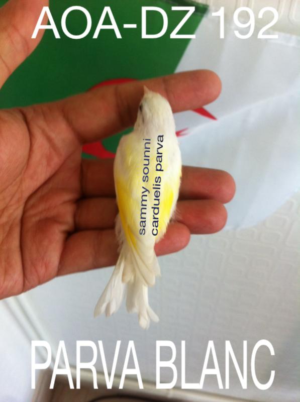 repro 2015 parva blanc***ma shaa allah***