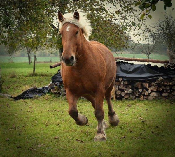 """"""" Le meilleur cheval n' est pas celui qui t' as mené où tu voulais lorsque tu étais en selle, mais celui qui as fait voyagé ton coeur alors que tu l' écoutais respirer. """""""