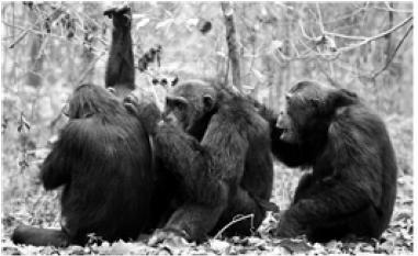 Ecoéthologie ou écologie comportementale.