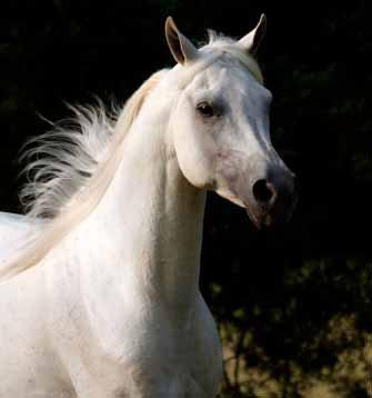 I really like horses