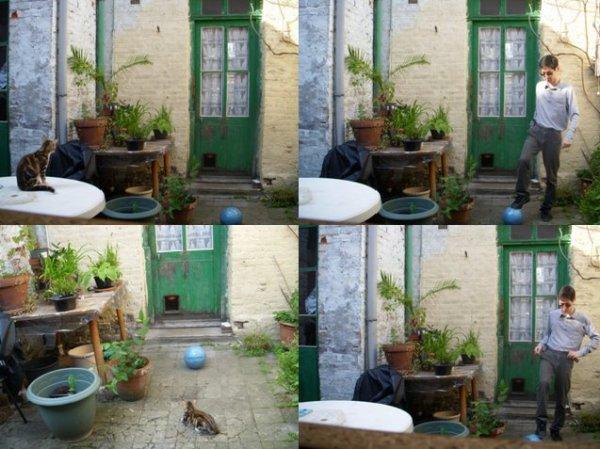 Après-midi avec chaton: