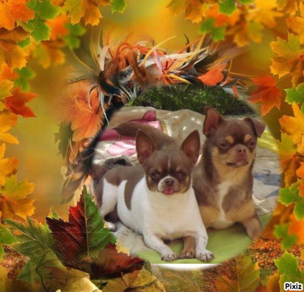 Voila l'automne :D