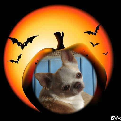Joyeuse Halloween de la part des futurs parents (l)