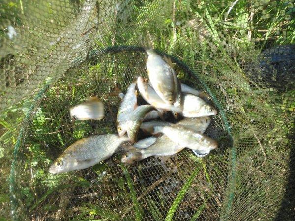 Un samedi pêche détente à Bonnay