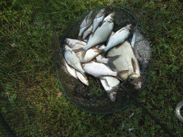 Week end pêche avec Juju à son étang !!!!
