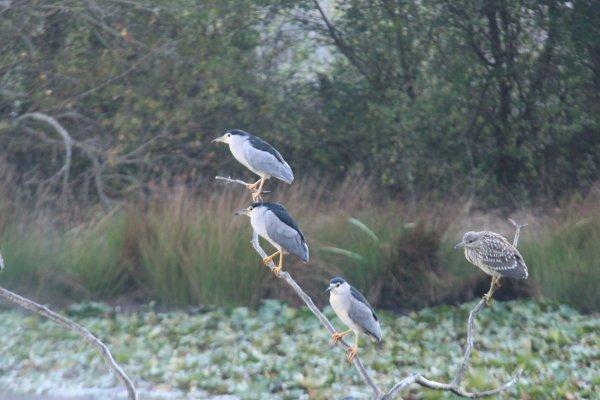 Le parc ornithologique du Teich