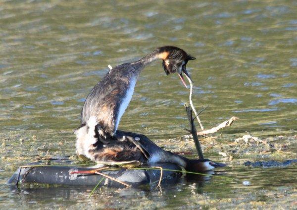 Quelques belles surprises au Teich