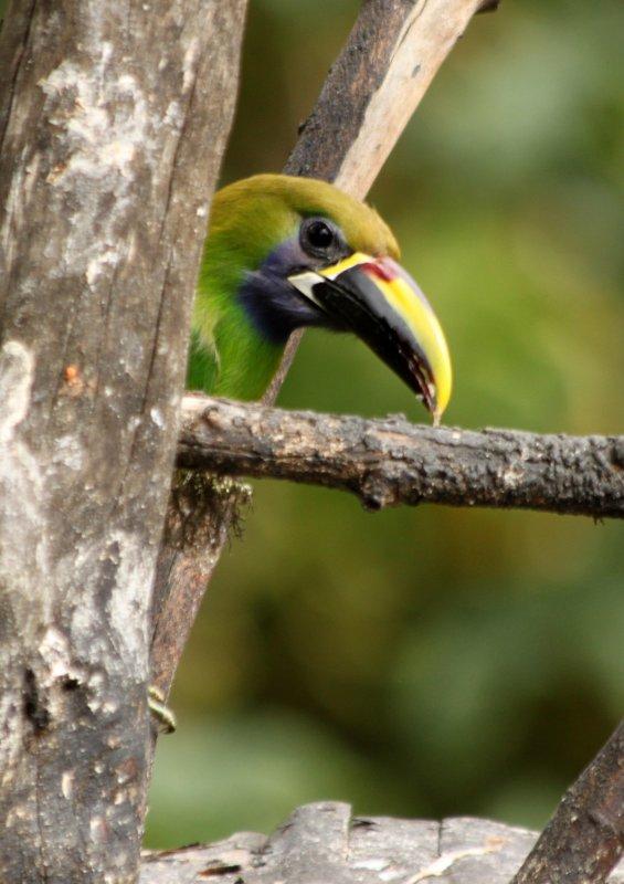 Costa Rica, paradis naturaliste