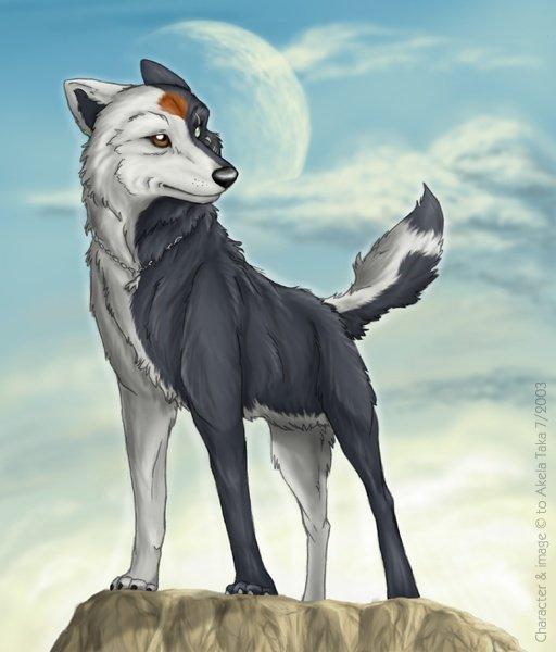 Akela Taka Le Loup A 2 Facades Loup Manga Et Autres
