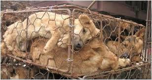 Stop à la vivisection