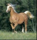 Photo de chevaux885