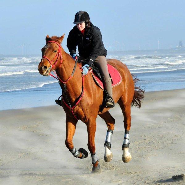 La vue de ce petit cheval m'impressionna d'une manière que je ne puis très bien expliquer. Il était plus qu'exceptionnellement fort, rapide et superbe dans sa façon de se mouvoir, il me faisait rêver.♥