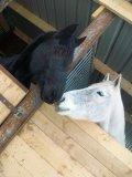 Photo de chevauxfalone